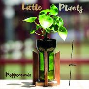 Cuchara Little Plant 24 Con Soporte, Maceta Autorregante
