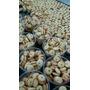 Bolachas(biscoitos Finos Amanteigados-santana)54 Potes-400g!