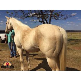 Cavalo Potro Quarto De Milha Tambor P.o Pai Top Firewater Zd