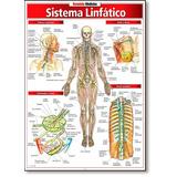 Sistema Linfático - Coleção Resumão Medicina