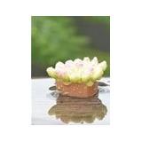 Vaso De Cactus Mini Jardim Avulso