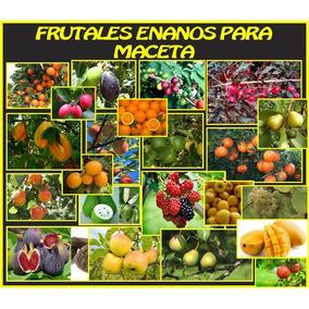 Aguacate Hass Y 2 Frutales Enanos Para Maceta Fertilizados