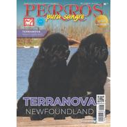 Revista Perros Pura Sangre. Terranova. Julio 2019