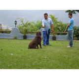 Entrenamiento Canino Danko Www.dankok9.com.ve