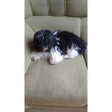 Cachorro Lindo!!!