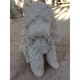 Perro Poodle