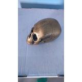 Peça De Decoração Crânio De Caveira
