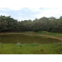 Se Vende 75,800 M2 De Terreno Rústico, Cuenta Con Acceso A Energía Eléctrica, Agua Potable, Tiene Un Arroyo Natural Y Un Estanque, Árboles De Mango, Árboles De Limón. A 3.5 Km De Plaza Comercial, 5km