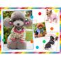 Super Kit Imprimible Moldes Y Patrones De Ropa Para Perros