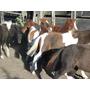 Petizos Ponys
