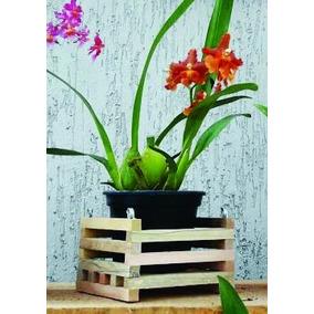 Cachepot De Madeira Rústica, Porta Vaso De Orquídea.15x15 Cm