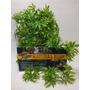 Planta Artificial Répteis E Terrário Canabis Md - Zoomed