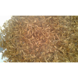 Capim Elefante Paraiso 35000 Semen Pasto/silo/forragem Verde