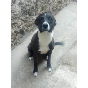 Doação De Cachorro Urgengenteeee!