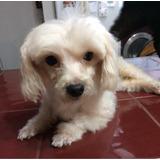 Kaleah En Adopción Responsable!!! Solo Vargas O Caracas