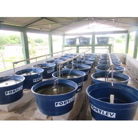 Projeto De Criacao De Tilapias Em Caixa D Agua Frete Gratis