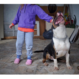 Bull Terrier Macho Disponible Para Montas Con Kcu