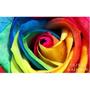 Semillas Rosa Arcoiris Multicolor Rosa Exotica Rainbow