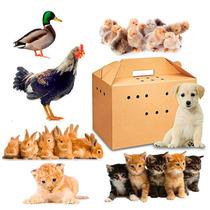 Paquete De 10 Cajas De Carton Para Traslado De Mascotas