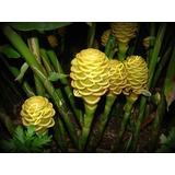 Ramos De Flores Exóticas: Heliconias, Ginger, Alpinias