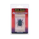 Deagostini Insectos Reales Japonesa Bug Esmeralda Del Escara