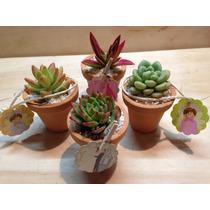 Recuerdos Originales Baby Shower Con Plantas Suculentas Mini