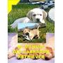 El Manual Del Labrador Retriever Y Adiestramiento En Pdf