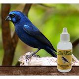 Hormônio Feromônio Canta Pássaro Indutor Canto Azulão