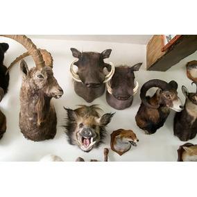 Aprenda A Empalhar Animais Curso Prático De Taxidermia