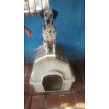 Pongo En Adopción Mi Cachorra Dalmata