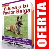 Guía De Entrenamiento Para Perro Pastor Belga 4
