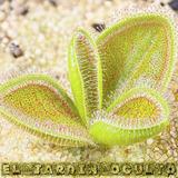 Semillas Planta Carnivora Rara Mix X 50 U Venus Sarracenia
