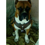 Bonito Perro Boxer Linea Americana Para Maquila