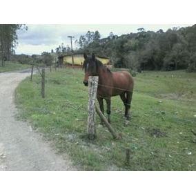 Cavalo De 6 Anos Manga Larga Só Macha Manso Pra Levar Hoje