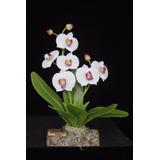 Orquídeas Artificiales Especiales- Artesanía Para Regalo