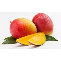 Frutales Mango Tommy Arbolito Injerto Mas De 1 M.