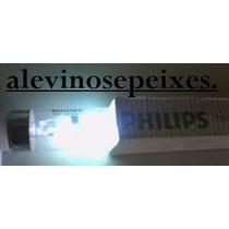 Lampada Uv -c Ultra Violeta 8w T5 Germicida 4 Pinos Philips