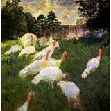 Ave Peru Campo Fazenda França 1877 Pintor Monet Tela Repro