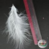 Plumas De Marabu Grandes Colores Surtidos A Eleccion!! X50u