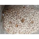 Vendo Semillas De Porotos Rubi Certificadas 2000 Kilos