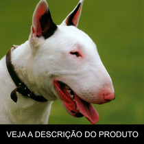 Bull Terrier - Como Criar Seu Filhote (frete Gratis) +brinde