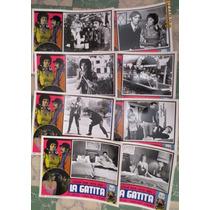 8 Lobby Cards, La Gatita, Jacqueline Andere, Hector Suarez