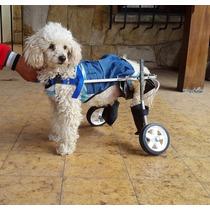 Carrito para perros perros en mercado libre argentina for Carritos para perros