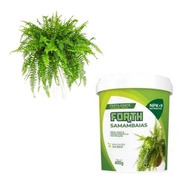 Adubo Fertilizante Forth Samambaia 400g - Crescimento