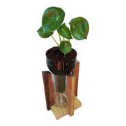 Peperomia Cuchara Little Plant 24 Con Soporte