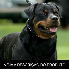 Rottweiler - Como Criar Seu Filhote (frete Gratis) + Brinde!