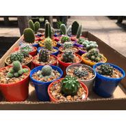 Set X 100 Cactus Y/o Suculentas En Maceta 6