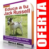 Guía De Entrenamiento Para Perro Jack Russell 2