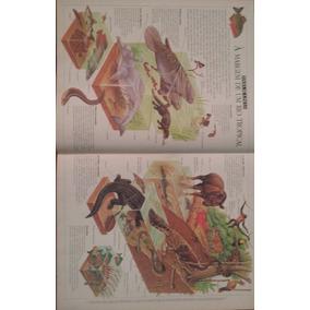 Poster Folha De S. Paulo - A Margem De Um Rio Tropical