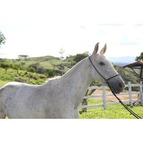 Égua Mangalarga Marchador Registrada Tordilha